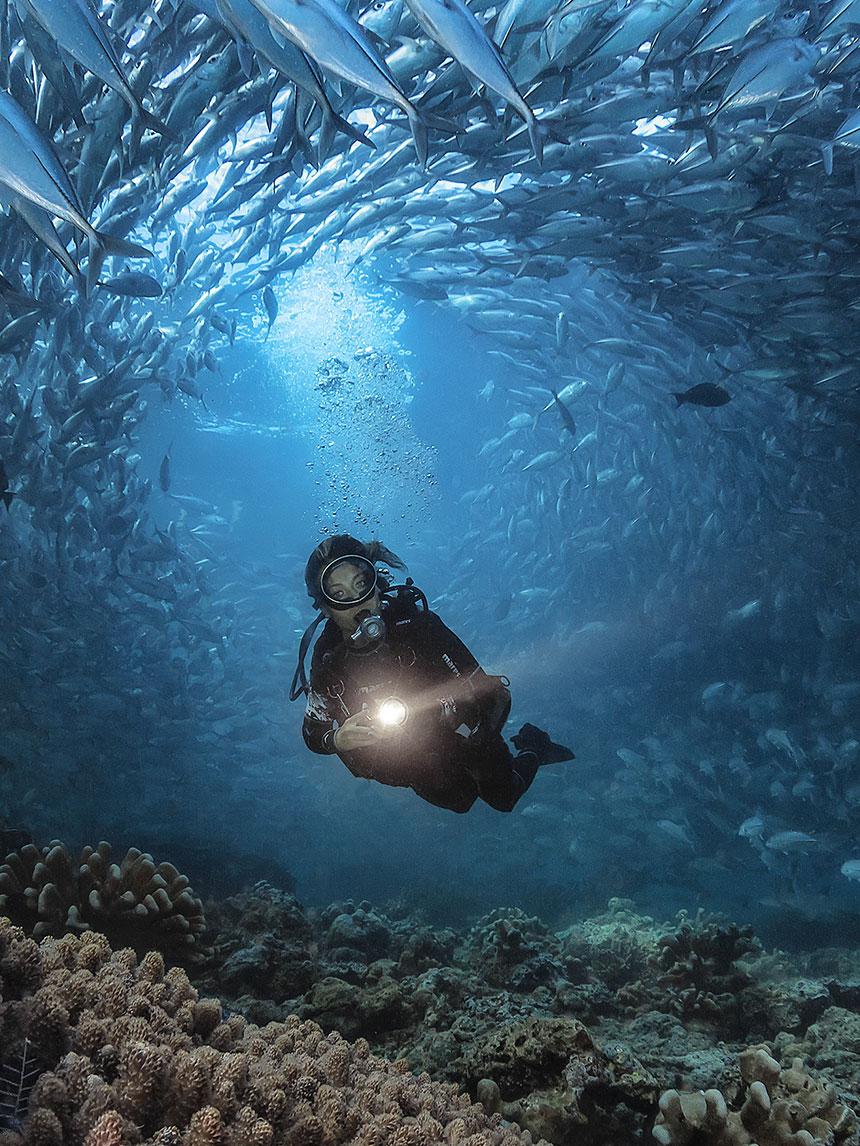 De reizende duiker