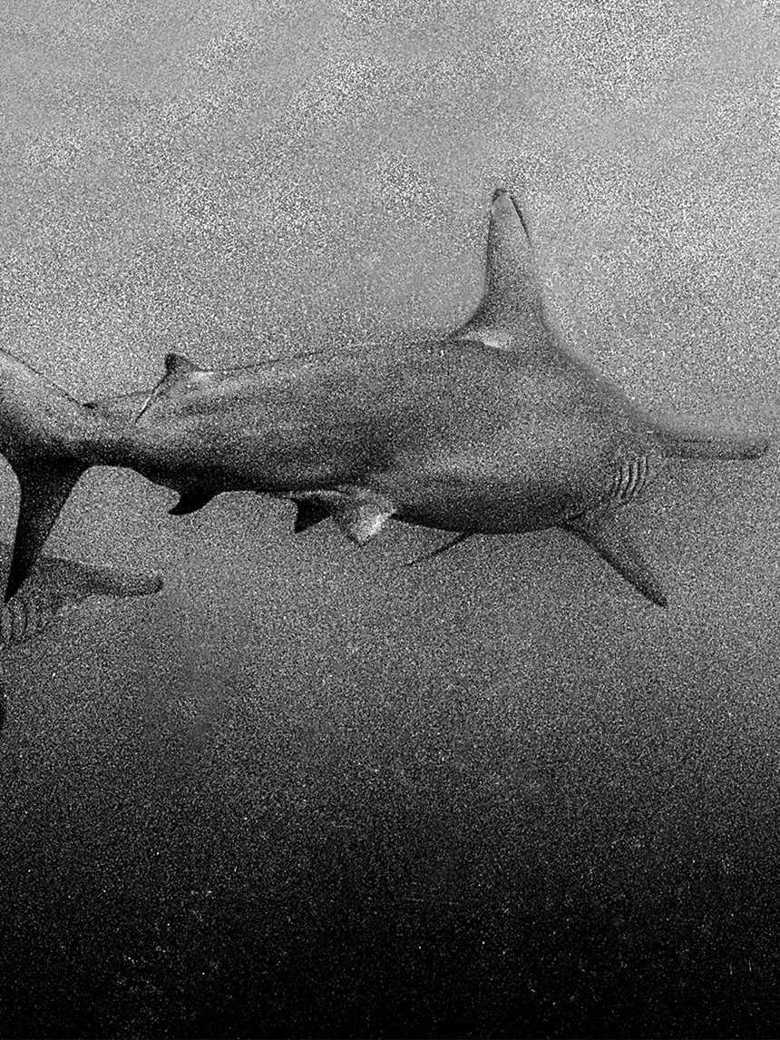 Come ho imparato a essere il medico subacqueo di me stesso
