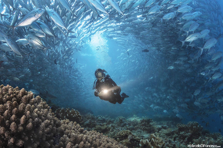 Cult dive barracuda point sipadan island - Sipadan dive sites ...