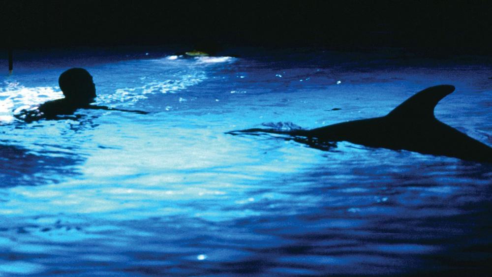 Plongée Pop Le Grand Bleu