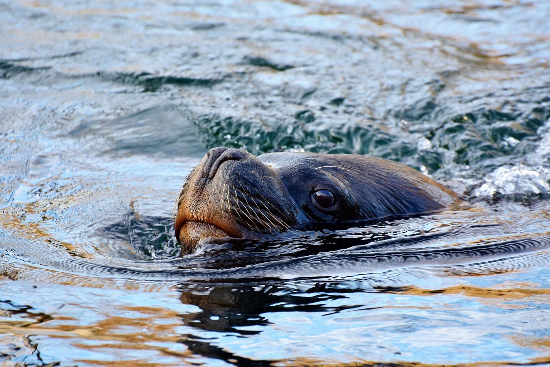 Pueden las ballenas sufrir una enfermedad descompresiva?